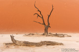 Deadvlei In The Evening
