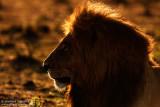 Masai Mara March 2015