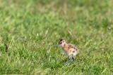 Birdwatching in the Netherlands