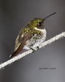Hummingbirds 2013