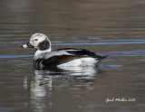 Long-tailed Duck Beaver Fork Lake Conway, AR