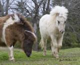 Neighbor's ponies