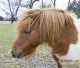 Neighbor's pony