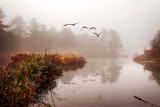 Geese over misty lake, Dorchester