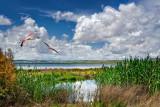 Flamingoes, Laguna de Fuente de Piedra