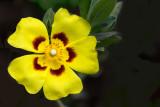 Bright yellow flower (2157)