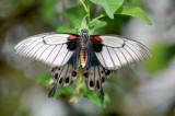 Butterfly 01 ~ Buckfastleigh