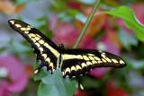 Butterfly 02 ~ Buckfastleigh