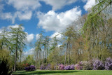 Tall trees and rhododendrons, Knightshayes