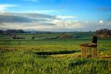 Seat in a field near Ilminster (2001)
