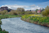 Stroll along the Parrett, Somerset