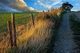 Dusky lane and fence, near Crewkerne (2021)