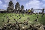 Lop Buri la cité des singes