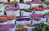 Bloemenmarkt (1)