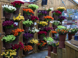Bloemenmarkt (2)