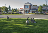 Milwaukie geese