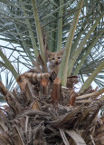 Palm-treed