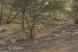 The wadi (1)