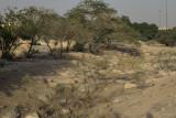 The wadi (2)