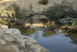 The wadi (7)