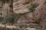 Desert wadi