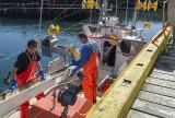 Grindavik fishermen at work