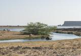 Khor Rouri, bathing camels