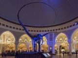 Dubai Dino, The Dubai Mall