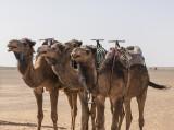 Sahara Desert, the three amigos