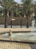 Romp in the fountain (2)