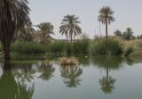 The 'Wild Area' on Riyadh's DQ