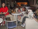 Doggie bar