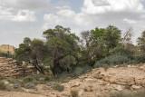 Hint of the wadi at Tuwaiq