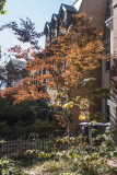 A bit of fall color on Capitol Hill