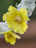 Same blossoms, different lens