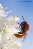 Flies, wasps & bees