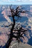 Grand Canyon: Sept 2015