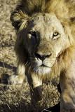 Lion Sands 2014