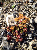 flora and rock