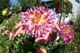 Cool Flower Photos