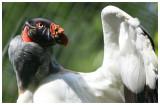 Bronx Zoo Aug 2013