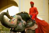 Elephant ready for the Gangaur procession