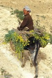 Farmer on his donkey, Matmata