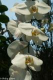 GardensbyBay-38.jpg