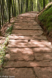 Stone-flagged paths between the bamboos