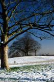 Hampstead Heath in winter