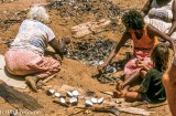 Women and girls cooking whelks