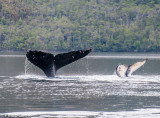 Whale-watching in the Straits of Magellan