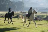 Tracing racehorses in Nuwara Eliya...