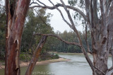 The Murray at Echuca